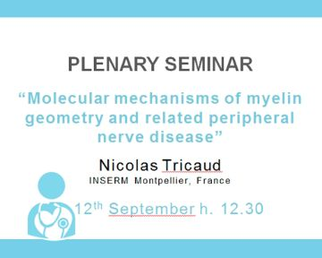 "Plenary Seminar: ""Molecular mechanisms of myelin geometry and related peripheral nerve disease"""