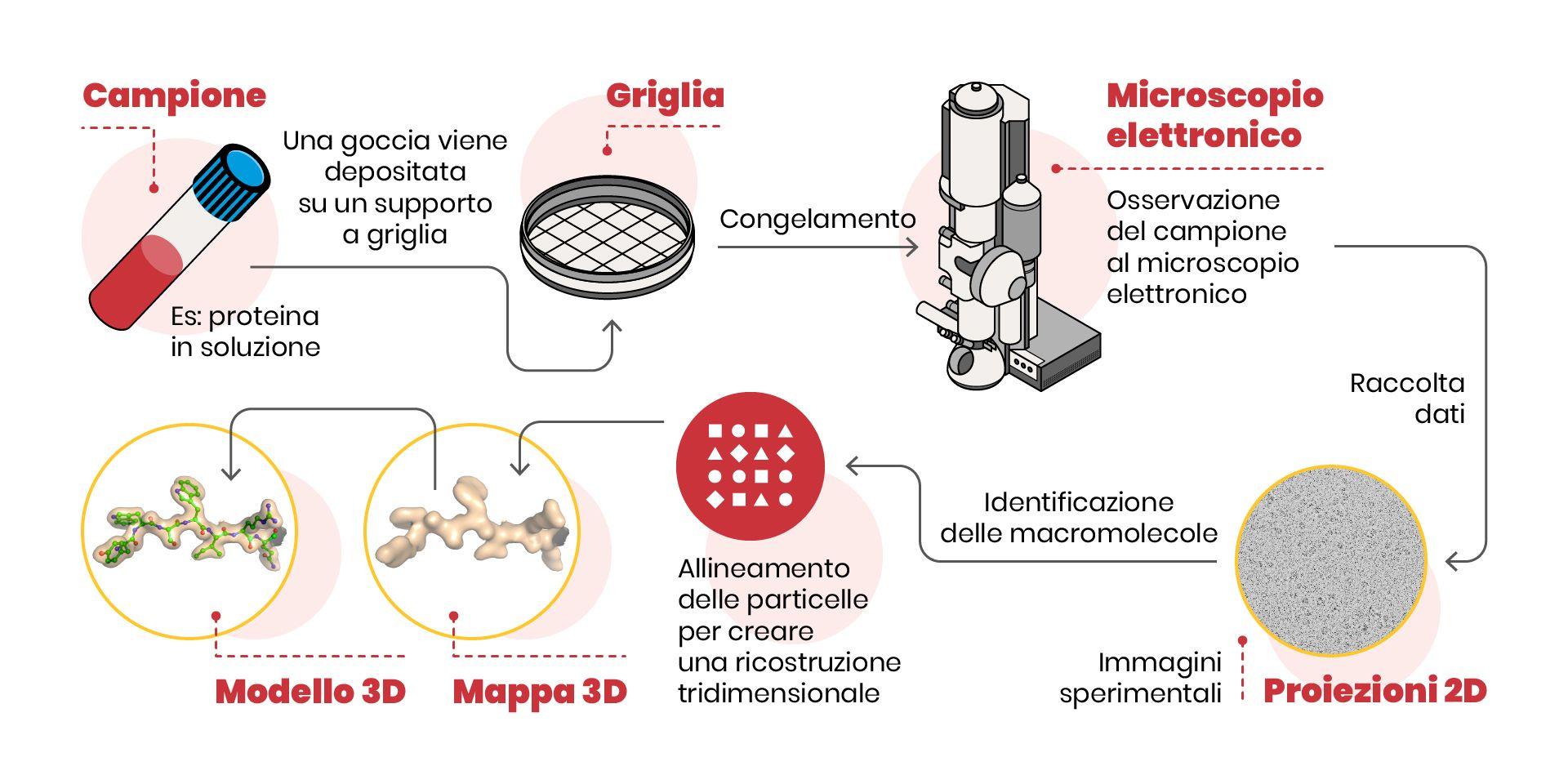 La criomicroscopia elettronica: piccoli elettroni per visualizzare grandi  molecole Università Vita-Salute San Raffaele
